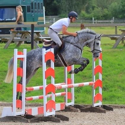 Irish Sport Horse Misty Mare